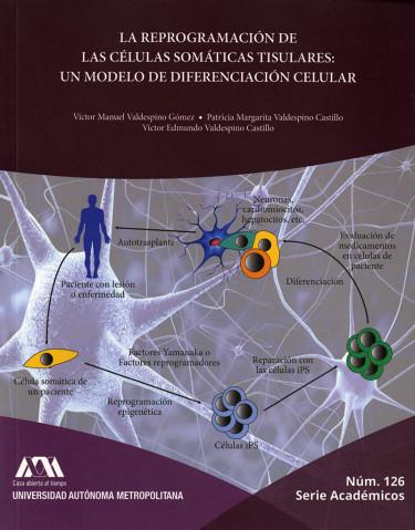 Reprogramación de las células somáticas tisulares: un modelo de diferenciación celular