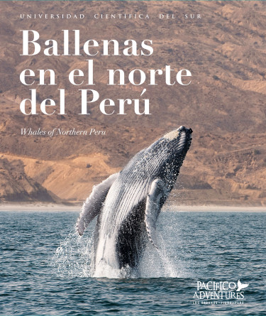 Ballenas en el norte del Perú
