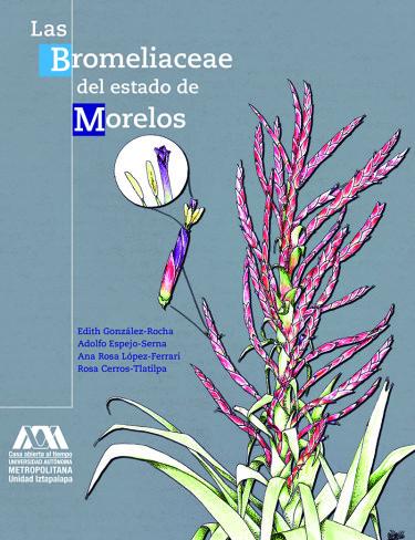 Bromeliaceae del estado de Morelos, Las