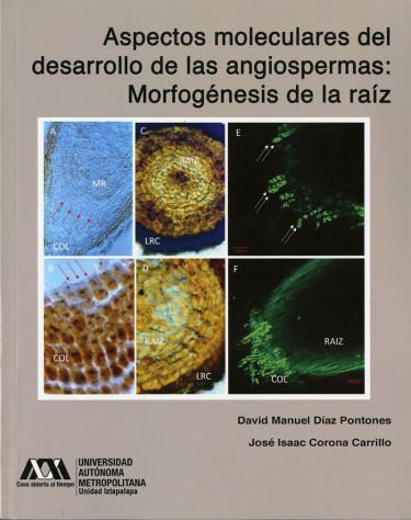 Aspectos moleculares del desarrollo de las angiospermas: morfogénesis de la raíz